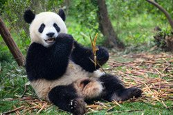google-panda-refresh-update-24